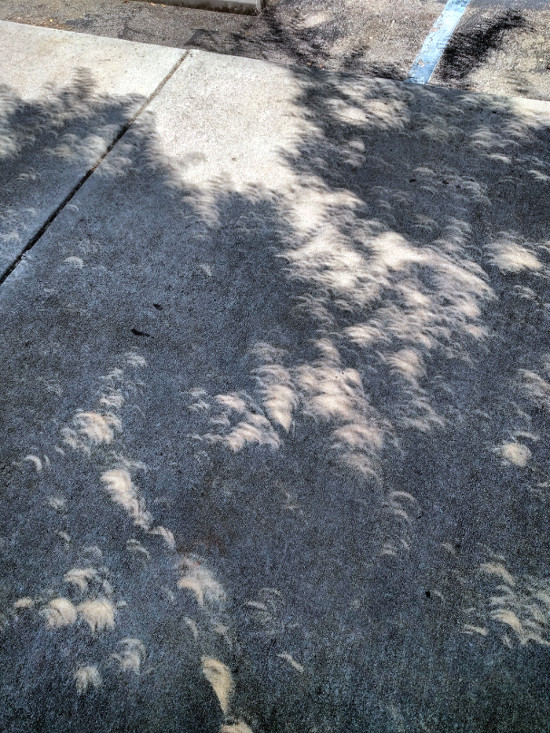2017 Eclipse - crescent shadows